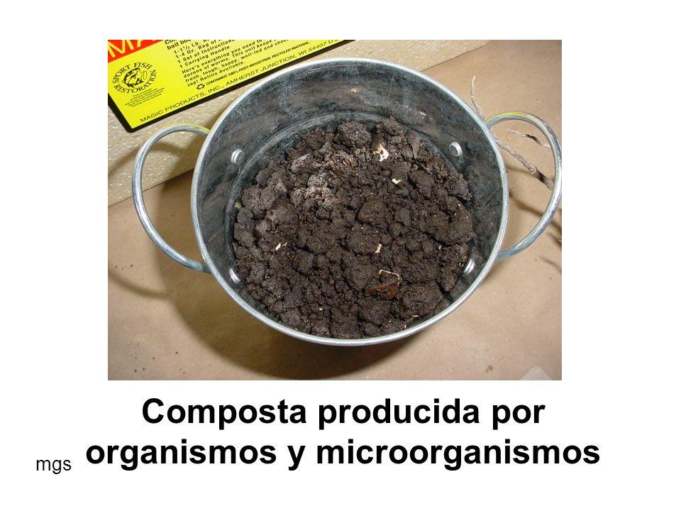 Composta producida por organismos y microorganismos