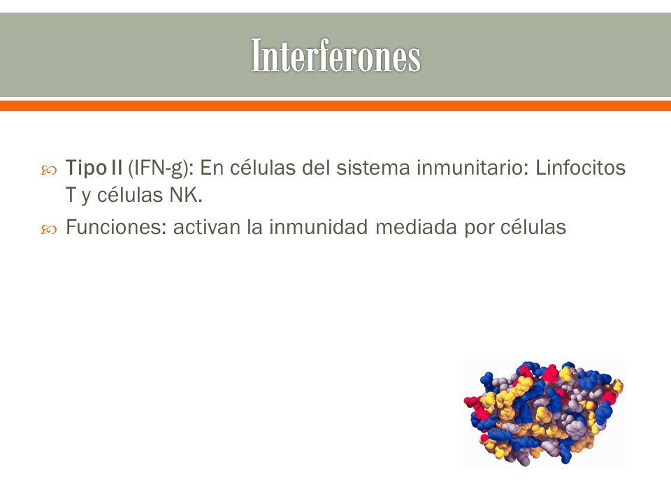 Interferones Tipo II (IFN-g): En células del sistema inmunitario: Linfocitos T y células NK.