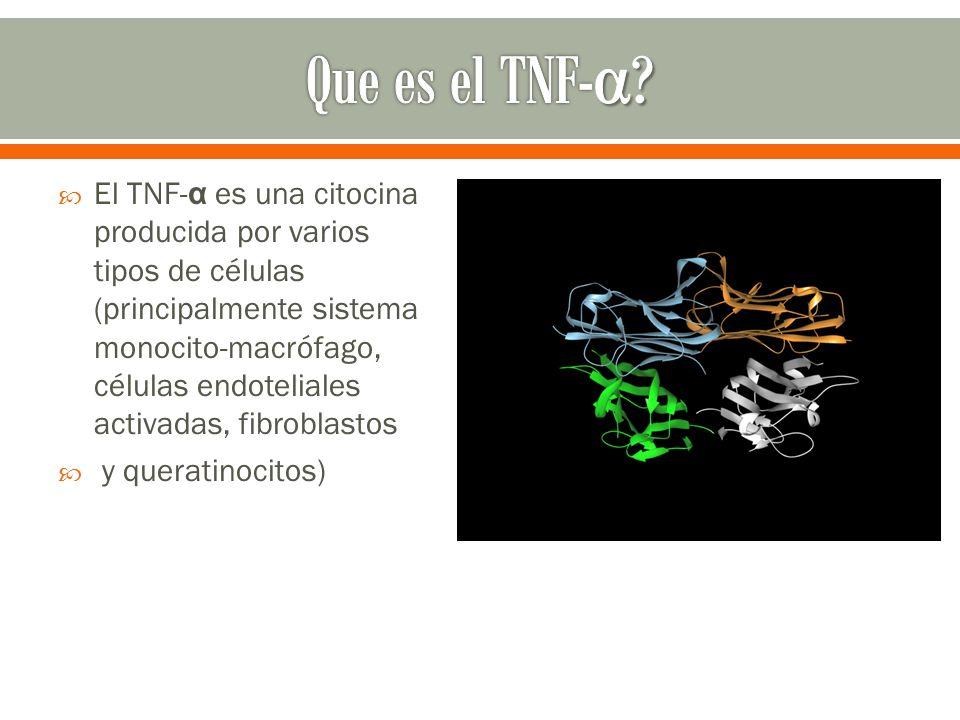 Que es el TNF-α