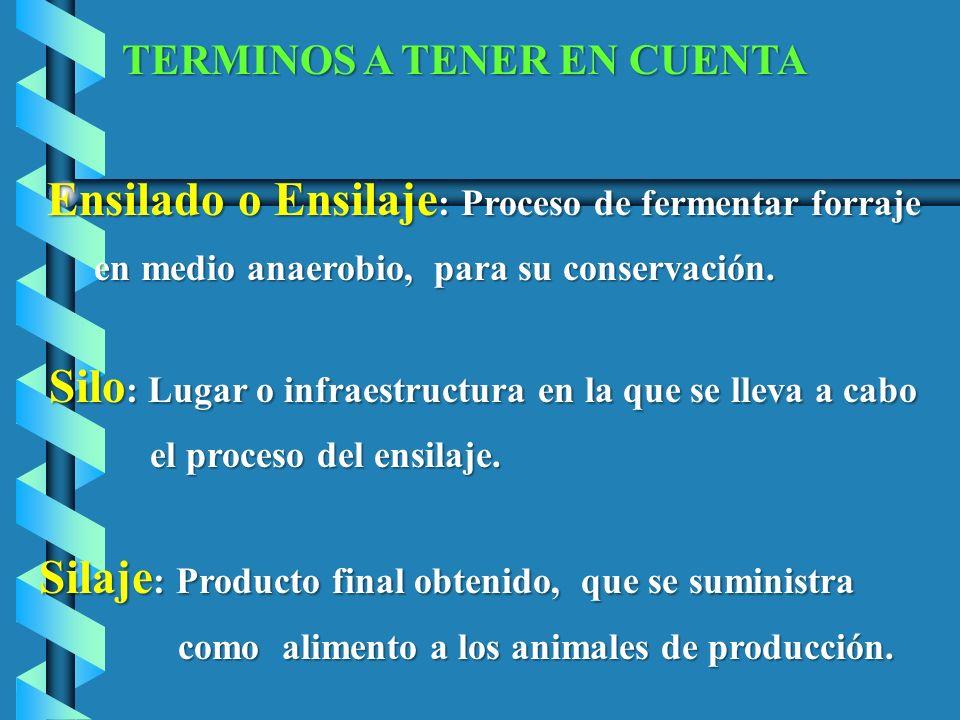 Ensilado o Ensilaje: Proceso de fermentar forraje