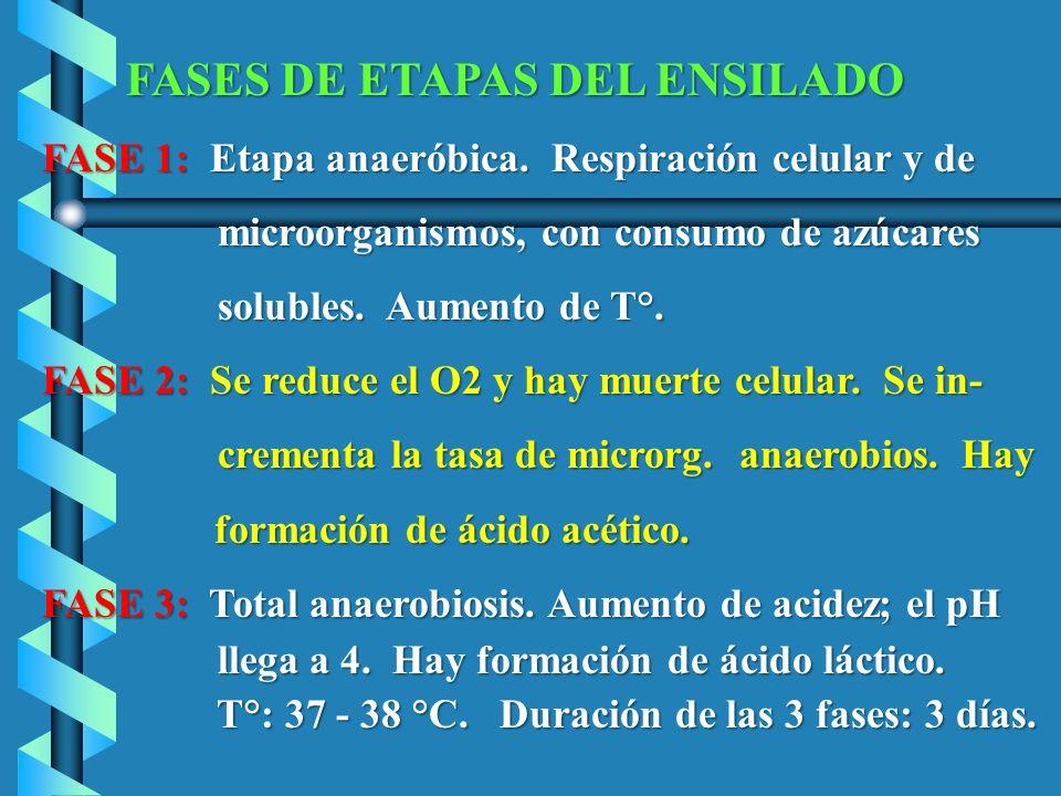 FASE 1: Etapa anaeróbica. Respiración celular y de