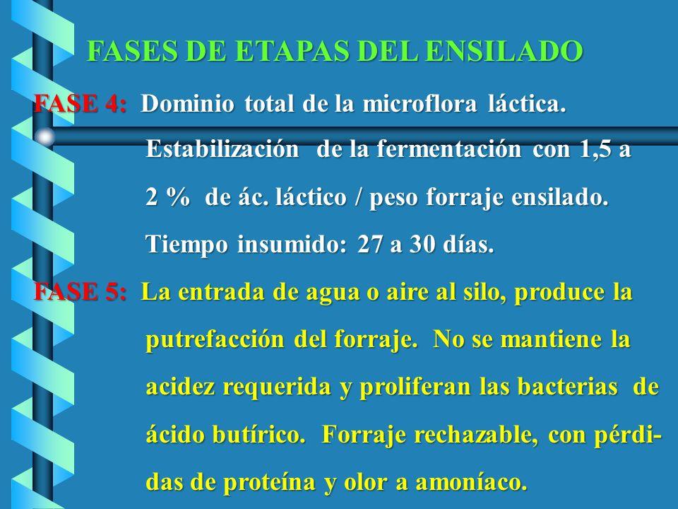 FASE 4: Dominio total de la microflora láctica.