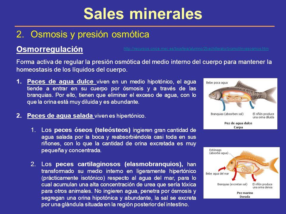 Sales minerales Osmosis y presión osmótica Osmorregulación