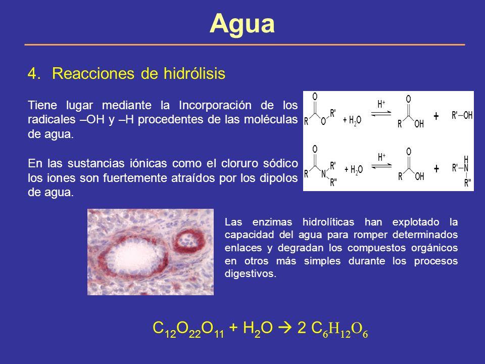 Agua Reacciones de hidrólisis C12O22O11 + H2O  2 C6H12O6
