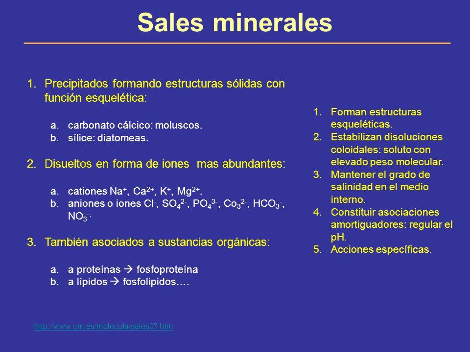 Sales minerales Precipitados formando estructuras sólidas con función esquelética: carbonato cálcico: moluscos.