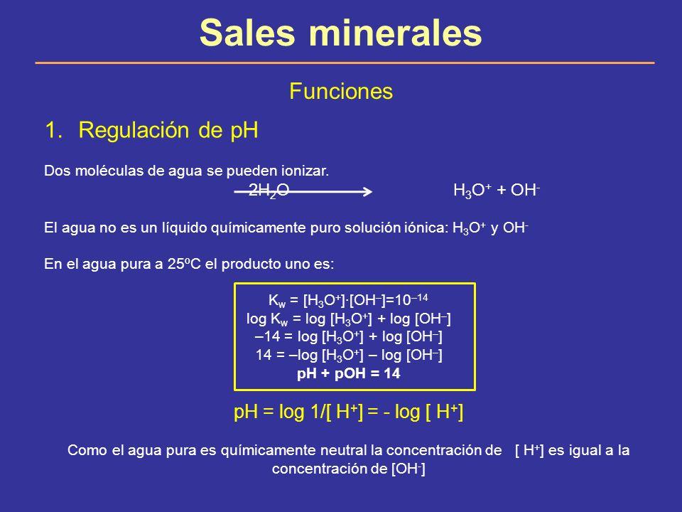 Sales minerales Funciones Regulación de pH