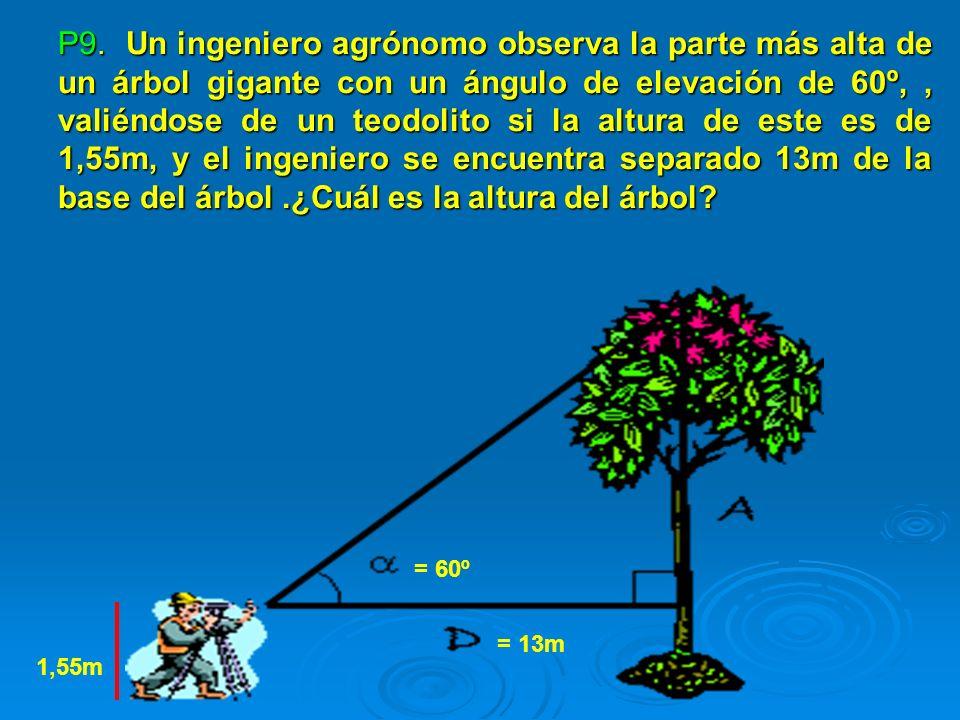 P9. Un ingeniero agrónomo observa la parte más alta de un árbol gigante con un ángulo de elevación de 60º, , valiéndose de un teodolito si la altura de este es de 1,55m, y el ingeniero se encuentra separado 13m de la base del árbol .¿Cuál es la altura del árbol
