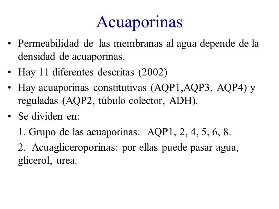 Acuaporinas Permeabilidad de las membranas al agua depende de la densidad de acuaporinas. Hay 11 diferentes descritas (2002)