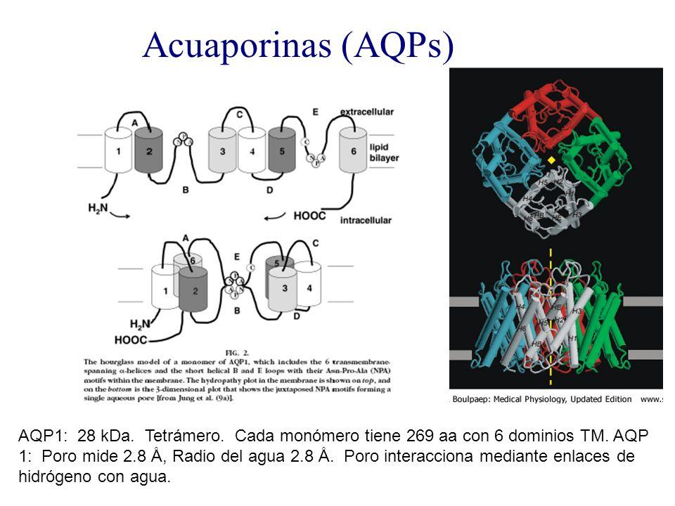 Acuaporinas (AQPs)