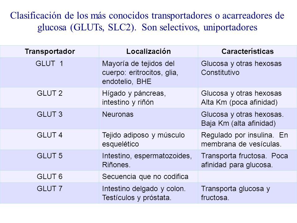Clasificación de los más conocidos transportadores o acarreadores de glucosa (GLUTs, SLC2). Son selectivos, uniportadores