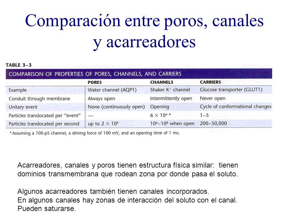 Comparación entre poros, canales y acarreadores