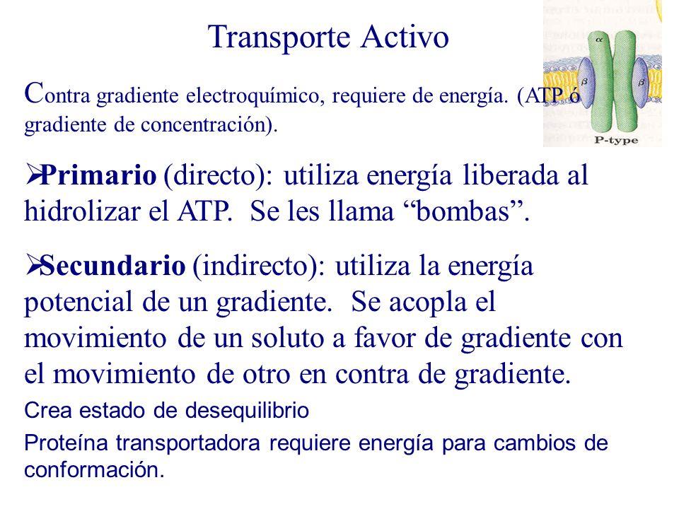 Transporte ActivoContra gradiente electroquímico, requiere de energía. (ATP ó gradiente de concentración).
