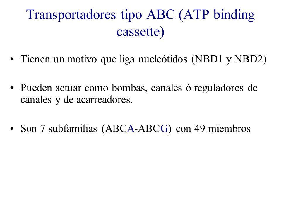 Transportadores tipo ABC (ATP binding cassette)