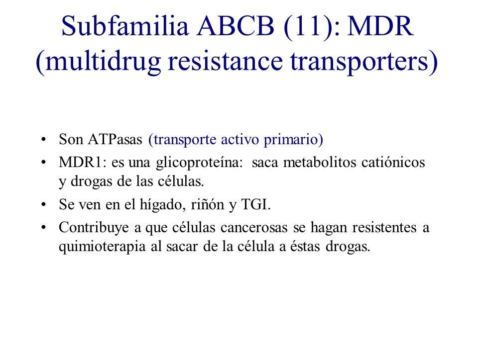 Subfamilia ABCB (11): MDR (multidrug resistance transporters)