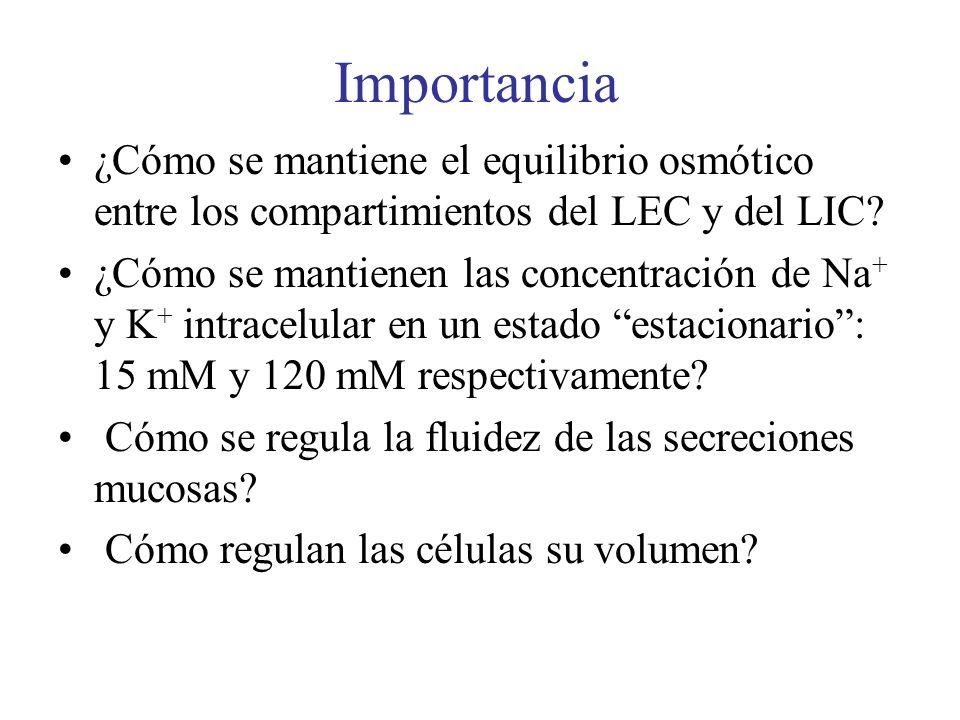 Importancia ¿Cómo se mantiene el equilibrio osmótico entre los compartimientos del LEC y del LIC