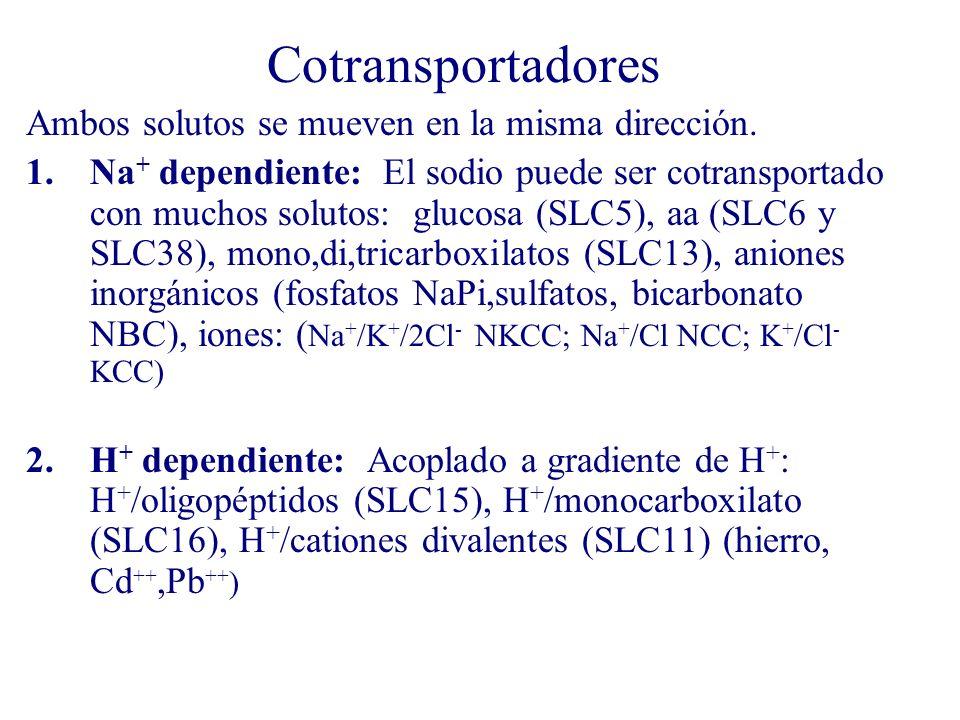 Cotransportadores Ambos solutos se mueven en la misma dirección.