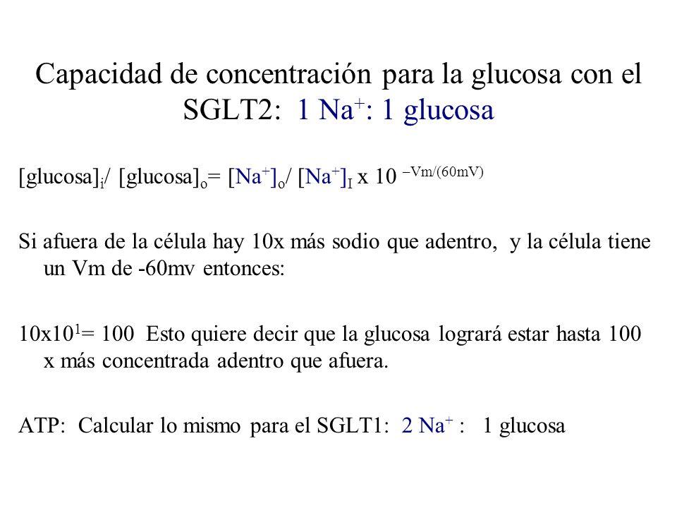Capacidad de concentración para la glucosa con el SGLT2: 1 Na+: 1 glucosa