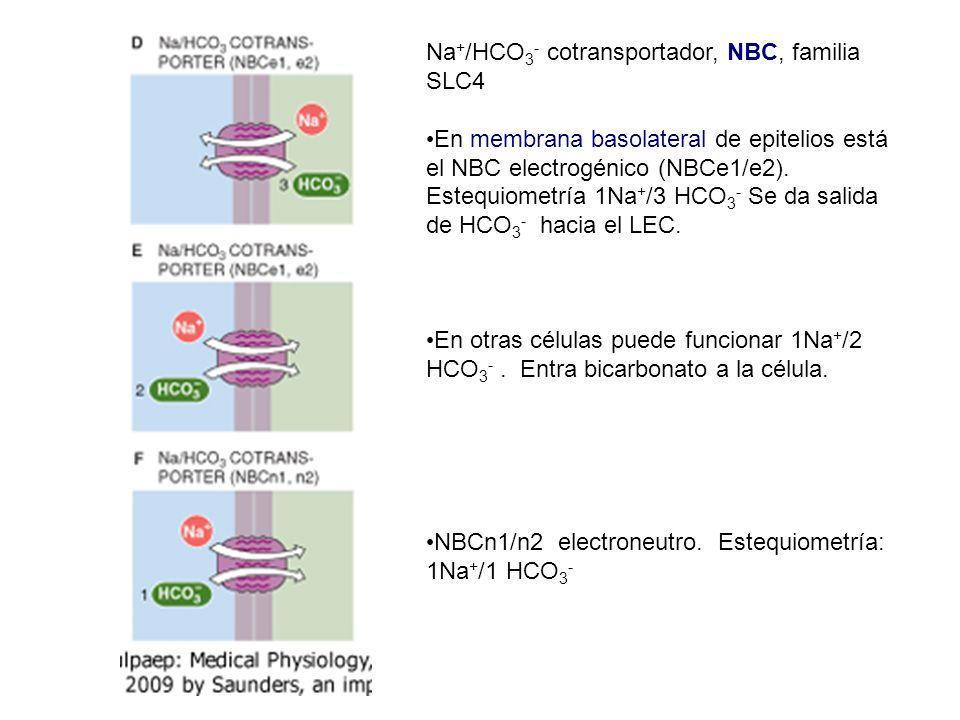 Na+/HCO3- cotransportador, NBC, familia SLC4