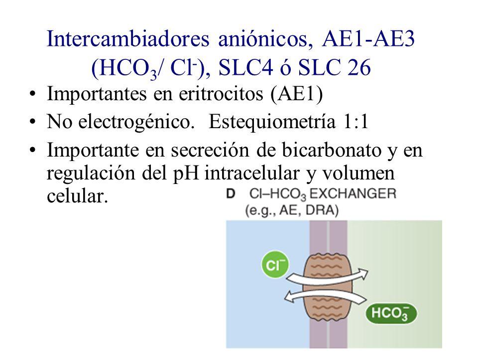 Intercambiadores aniónicos, AE1-AE3 (HCO3/ Cl-), SLC4 ó SLC 26