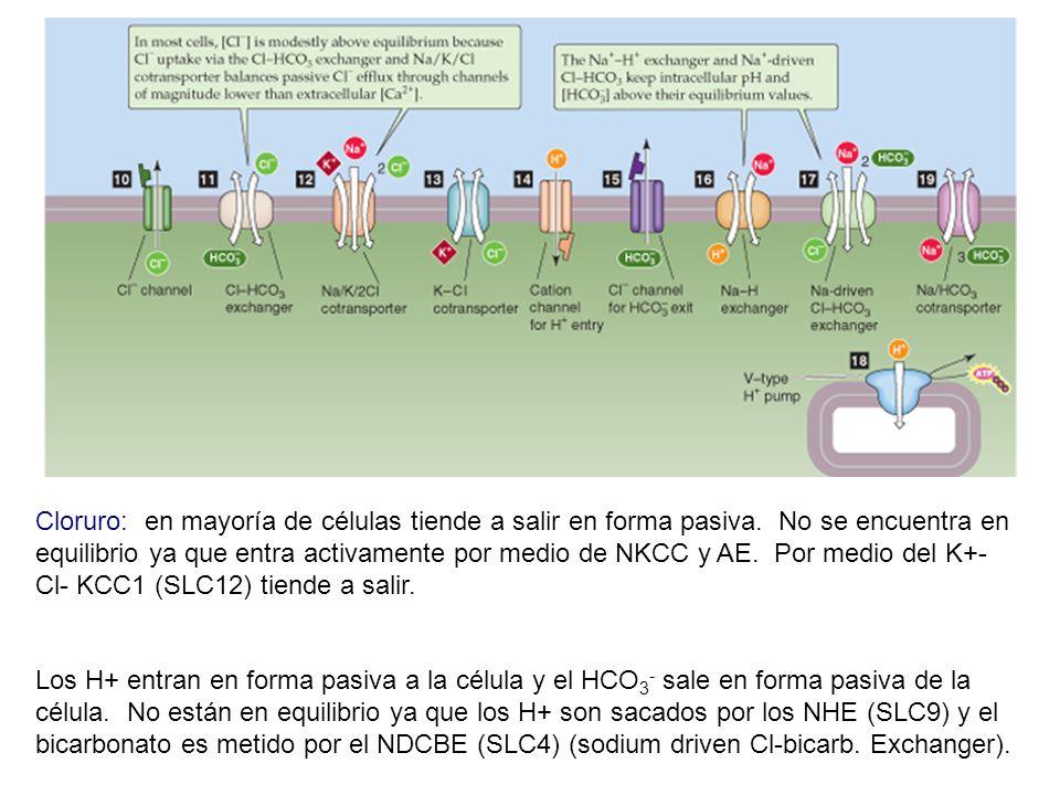 Cloruro: en mayoría de células tiende a salir en forma pasiva