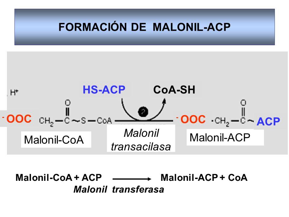 FORMACIÓN DE MALONIL-ACP
