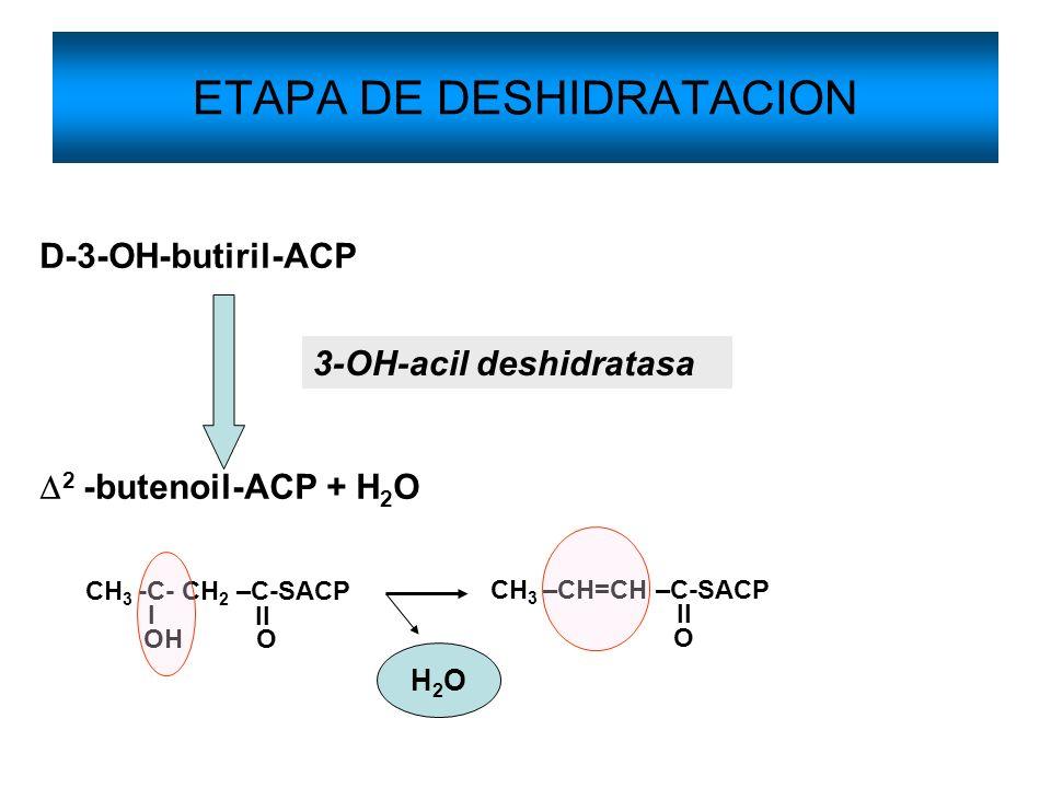 ETAPA DE DESHIDRATACION