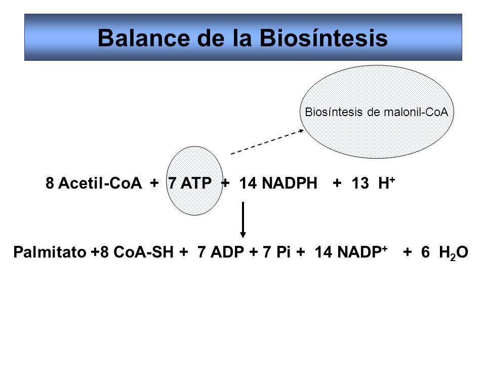 Balance de la Biosíntesis