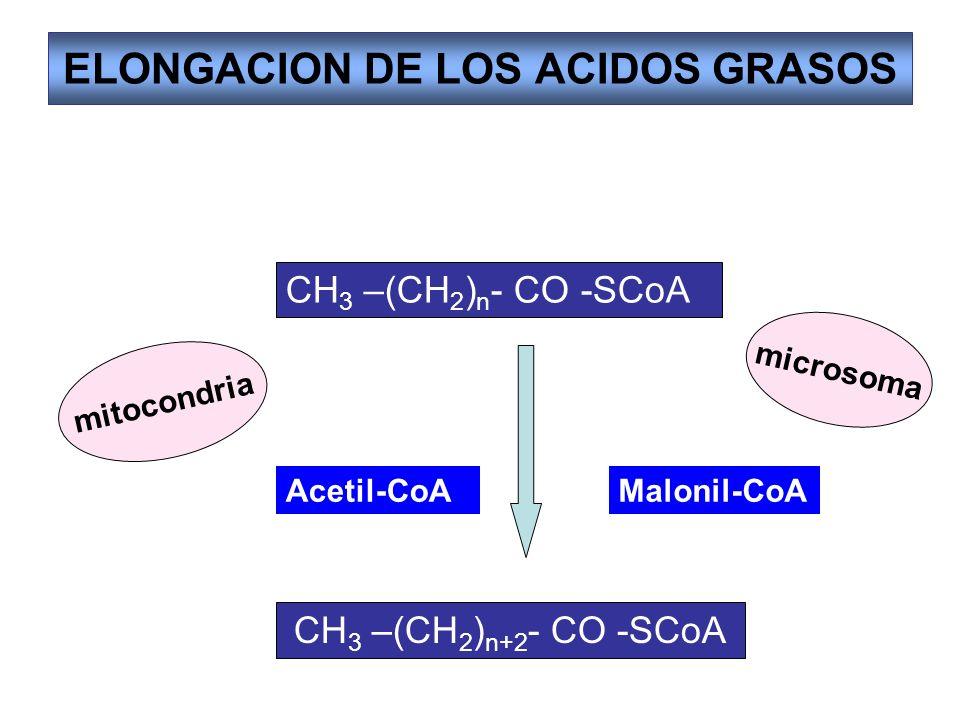 ELONGACION DE LOS ACIDOS GRASOS