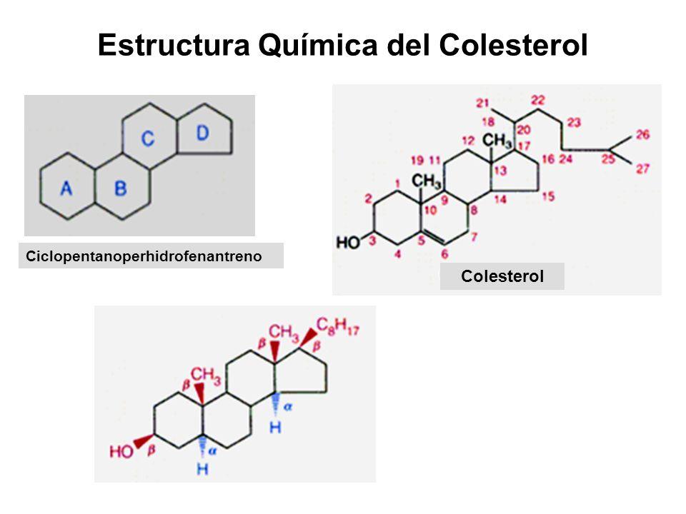 Estructura Química del Colesterol