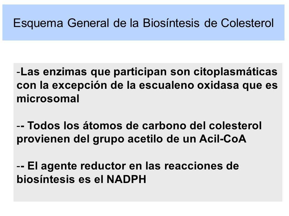 Esquema General de la Biosíntesis de Colesterol