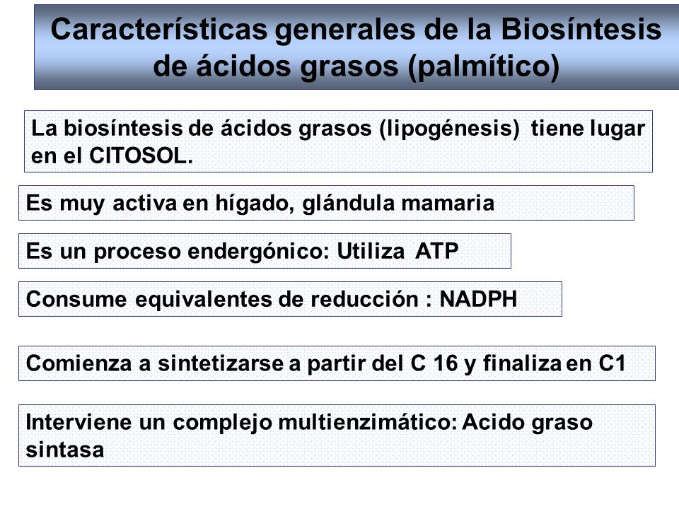 Características generales de la Biosíntesis de ácidos grasos (palmítico)