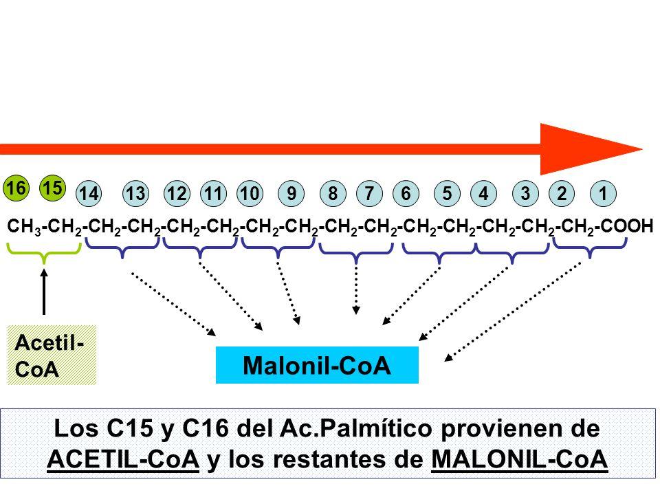 16 15. 14. 13. 12. 11. 10. 9. 8. 7. 6. 5. 4. 3. 2. 1. CH3-CH2-CH2-CH2-CH2-CH2-CH2-CH2-CH2-CH2-CH2-CH2-CH2-CH2-CH2-COOH.