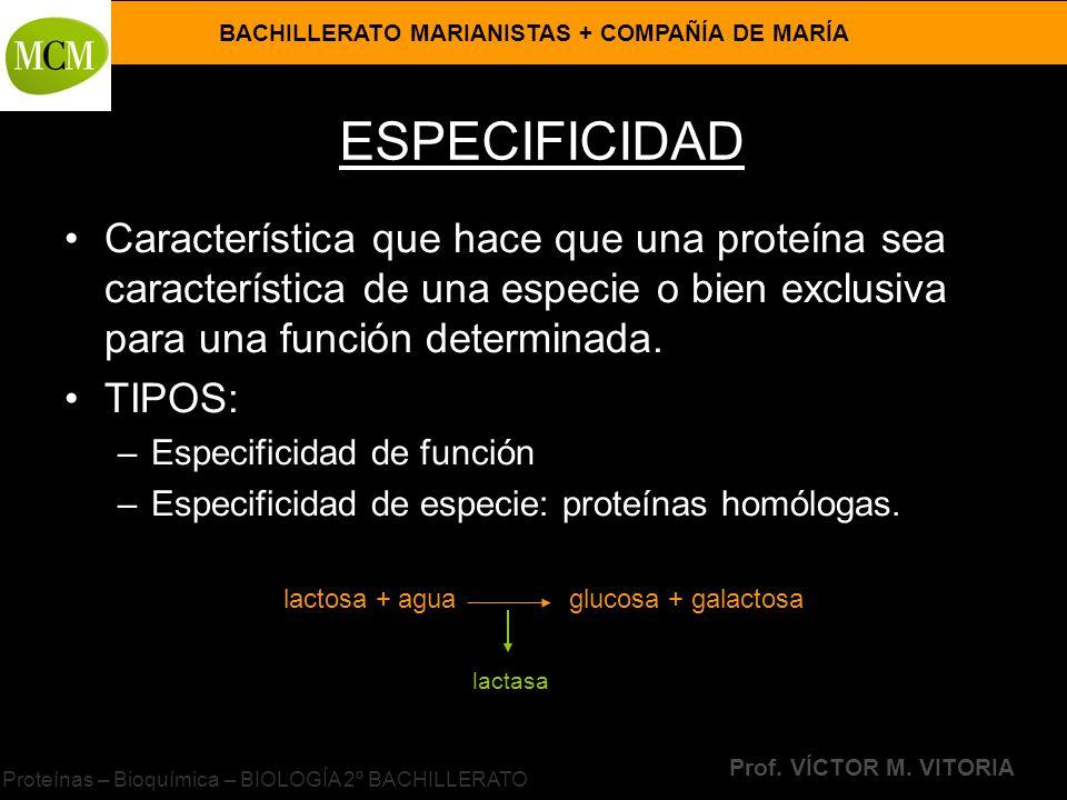Proteínas – Bioquímica – BIOLOGÍA 2º BACHILLERATO