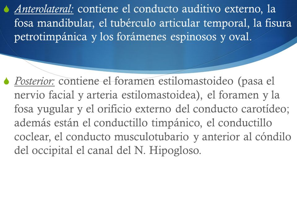 Anterolateral: contiene el conducto auditivo externo, la fosa mandibular, el tubérculo articular temporal, la fisura petrotimpánica y los forámenes espinosos y oval.