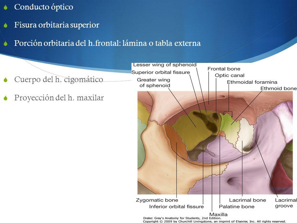 Conducto óptico Fisura orbitaria superior. Porción orbitaria del h.frontal: lámina o tabla externa.