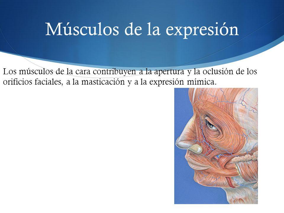 Músculos de la expresión