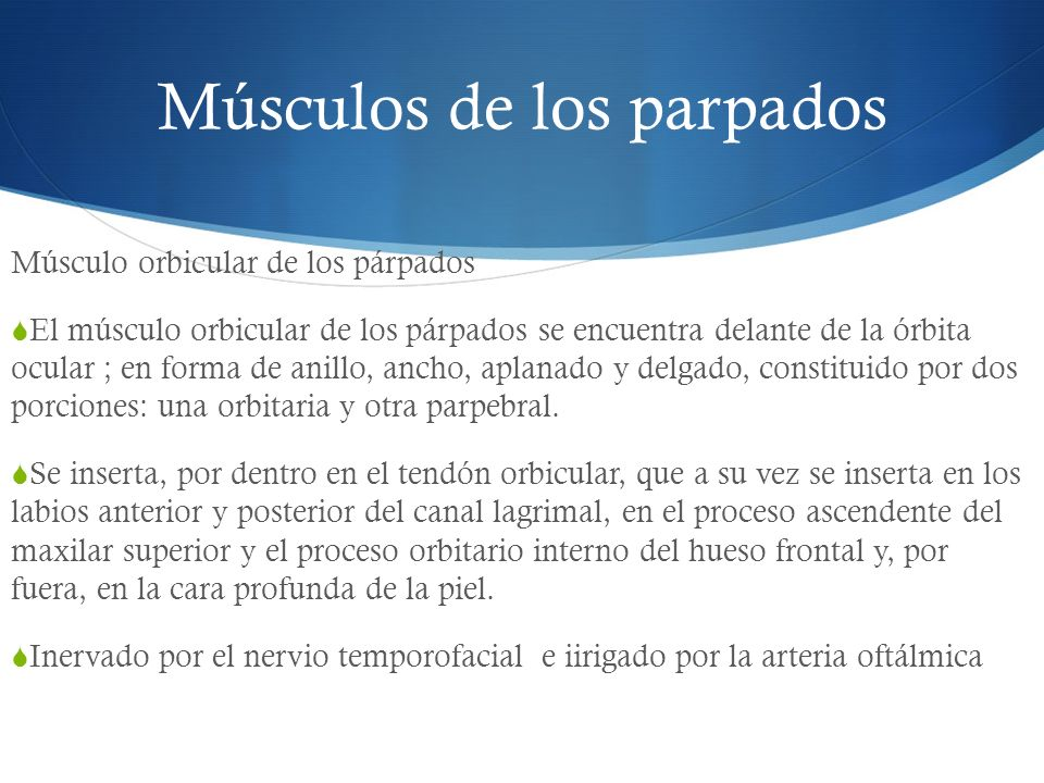 Músculos de los parpados