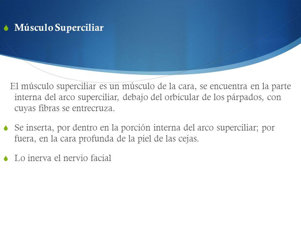 Músculo Superciliar