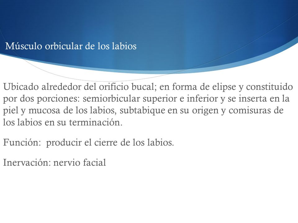 Función: producir el cierre de los labios. Inervación: nervio facial