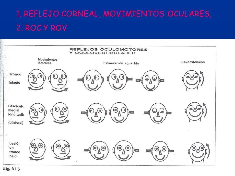 1. REFLEJO CORNEAL, MOVIMIENTOS OCULARES,