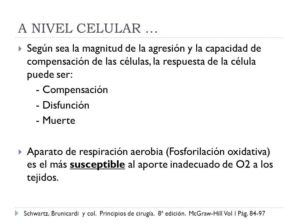 A NIVEL CELULAR … Según sea la magnitud de la agresión y la capacidad de compensación de las células, la respuesta de la célula puede ser: