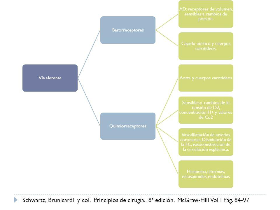 Vía aferente Barorreceptores. AD: receptores de volumen, sensibles a cambios de presión. Cayado aórtico y cuerpos carotídeos.