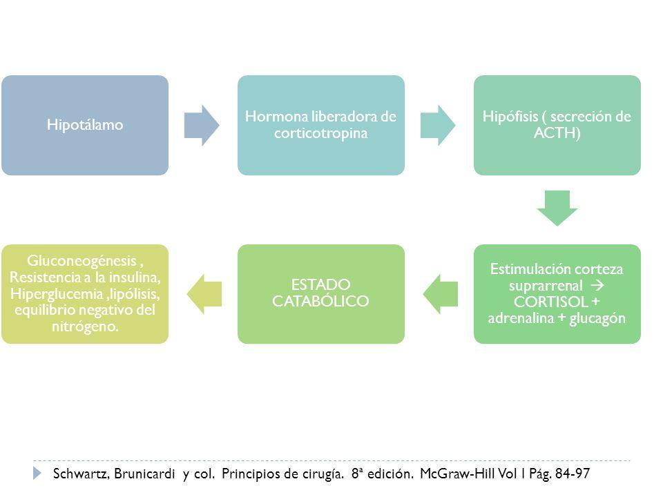 Hipotálamo Hormona liberadora de corticotropina. Hipófisis ( secreción de ACTH)