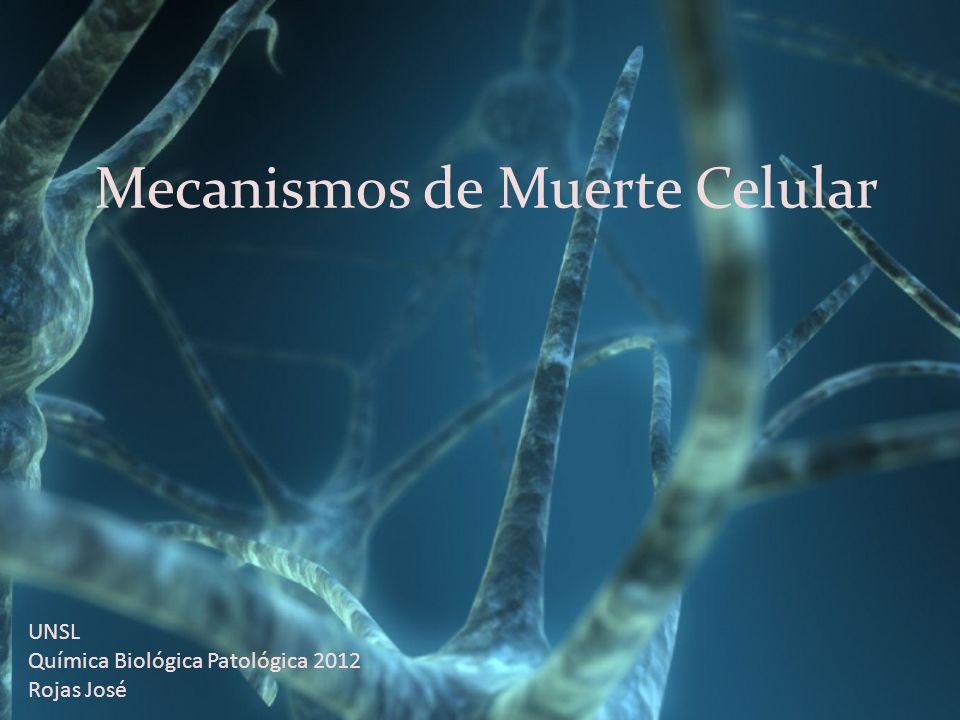 Mecanismos de Muerte Celular