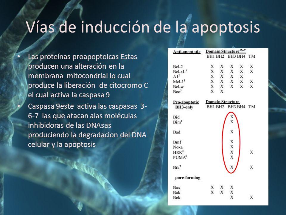 Vías de inducción de la apoptosis