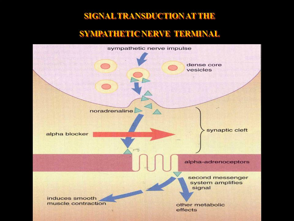 SIGNAL TRANSDUCTION AT THE