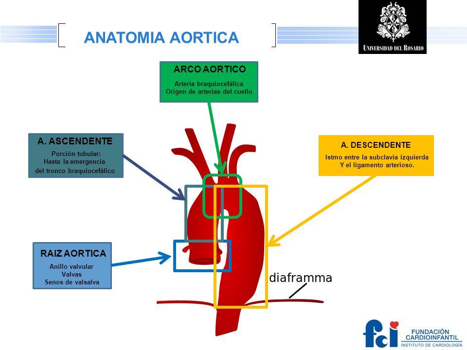 ANATOMIA AORTICA ARCO AORTICO A. ASCENDENTE RAIZ AORTICA