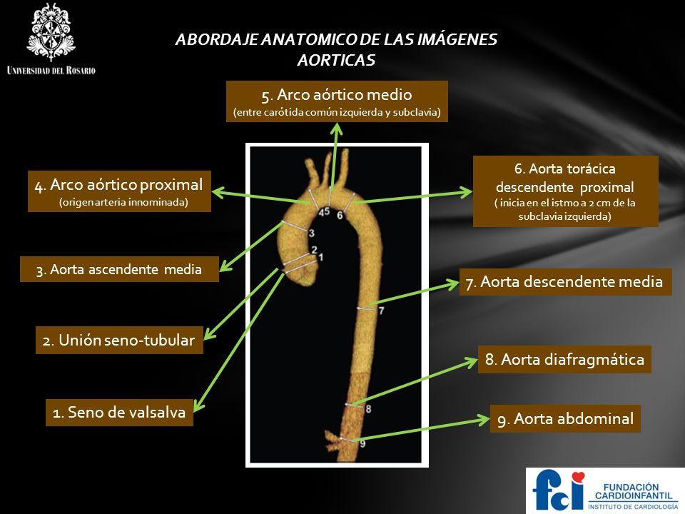 ABORDAJE ANATOMICO DE LAS IMÁGENES
