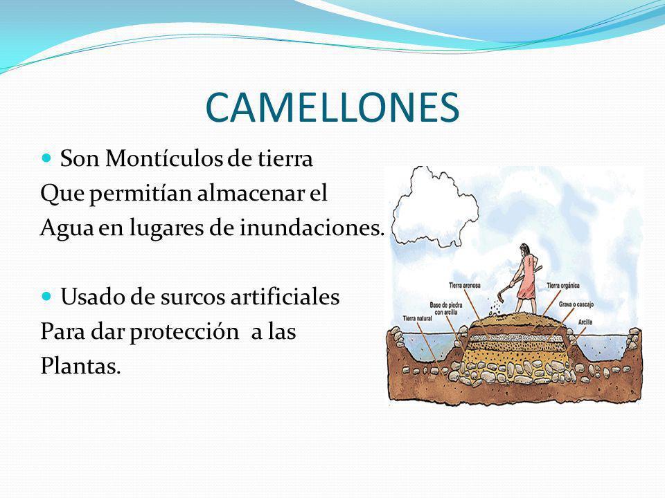 CAMELLONES Son Montículos de tierra Que permitían almacenar el