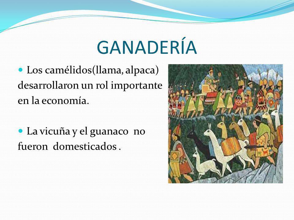 GANADERÍA Los camélidos(llama, alpaca) desarrollaron un rol importante